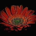 Daisy 105 by Ray Shrewsberry