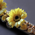 Daisy And Flute by Angela Murdock