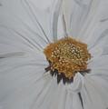 Daisy by Betty-Anne McDonald