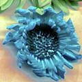 Daisy Blue by Heather Kirk