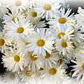Daisy Bouquet by Carol Sweetwood