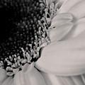 Daisy by Cheryl Day