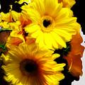 Daisy Daisy by Kathy Moll