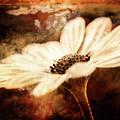 Daisy Delight by Lori Dobbs