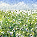 Daisy Field by Mary Tuomi