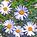 Daisy Flower Garden Abstract by Linda Mears