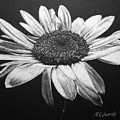 Daisy I by Marna Edwards Flavell