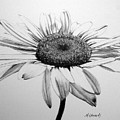 Daisy II by Marna Edwards Flavell