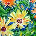 Daisy May by Marsha Elliott