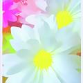 Daisy Poster by Susan Lafleur