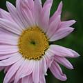 Daisy Power by Paul Slebodnick