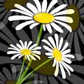 Daisy by Svetlana Sewell
