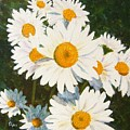 Daisy by Tami Booher