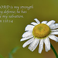 My Strength by Robert J Wagner
