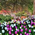 Dallas Arboretum by Tamyra Ayles