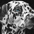 Dalmatian by Celestial Images