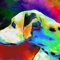 Dalmatian Dog Portrait by Svetlana Novikova