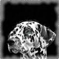 Dalmatian Dog Watercolor by Edward Fielding