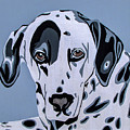 Dalmatian by Slade Roberts