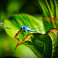 Damselfly by Mariola Bitner