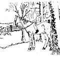 Dan And Horse 11 by Larry Campbell