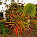 Dana Point Garden  by Robert Meyers-Lussier
