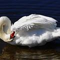 Dance Of The Swan by AnnaJanessa PhotoArt