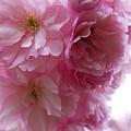 Dancing Blossom by Brenda Kean
