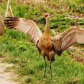 Dancing Crane by Lori Mahaffey