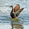 Dancing Duck by Carol Groenen