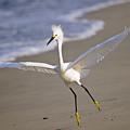 Dancing Egret by Christine Kapler