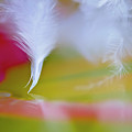 Dancing Feather by Christine Kapler