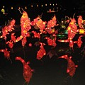 Dancing Goldfish Pond At Night by Sheri Gundry