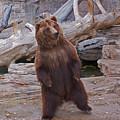 Dancing Grizzly by Ernie Echols