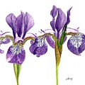 Dancing Iris by Sheila Perry