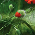 Dancing Poppies by Carol Cavalaris