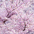 Dancing Sakura Haiku by Iryna Goodall