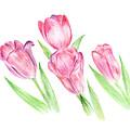 Dancing Tulips by Elizabeth Lock