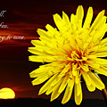 Dandelion Against Sunset With Inspirational Text by Donald  Erickson