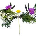 Dandelion Balancing Act by Lise Winne