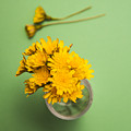 Dandelion Flower Clippings by Jorgo Photography - Wall Art Gallery