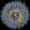 Dandelion Glow II Square by Terry DeLuco