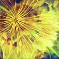 Dandelion Harvest by Terry Davis
