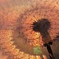 Dandelion Illusion by Tim Allen