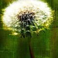Dandelion In Green by Lali Kacharava