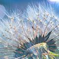 Dandelion In Light by Brad Boland