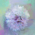 Dandelion In Pastel by Terry Davis