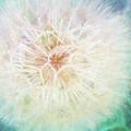 Dandelion In Winter by Terry Davis