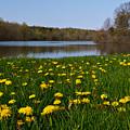 Dandelion Lake by James Reed