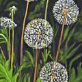 Dandelion Puff by Carolyn Shireman